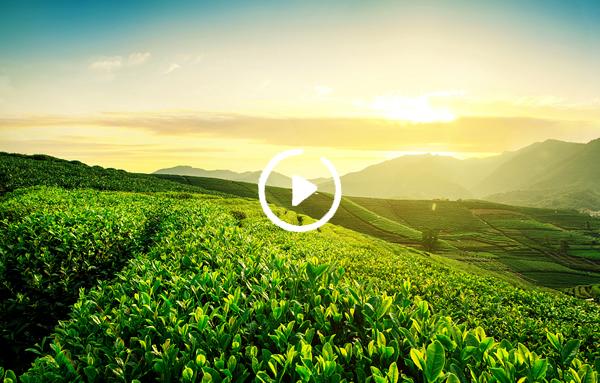 磷钾复合肥 助力绿色农业
